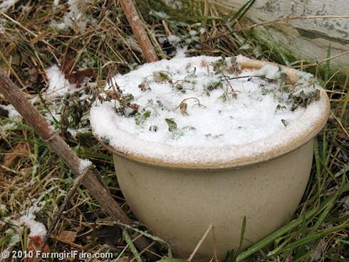 White Christmas Garden 2