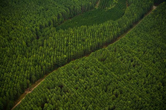 pine forest patterns