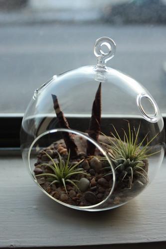 My terrarium