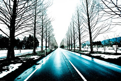 Winter (moaan) Tags: road snow vanishingpoint avenue metasequioa dawnredwood  treelinedroad  ef1635mmf28usm gettyimagesjapanq1 gettyimagesjapanq2