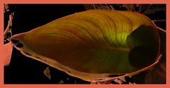 leaf in abstract (Leonard J Matthews) Tags: plant abstract art nature leaf flora australia creation environment mythoto thedefiningtouch deftouch