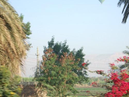 Fertile Nile Plains