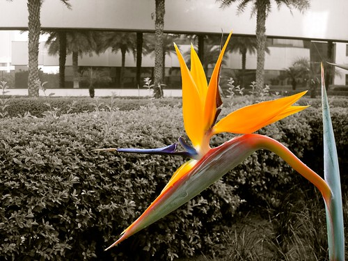 The Flightless Bird