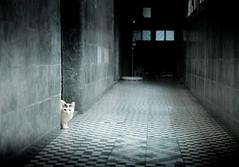 Lonely (Yiskaholina) Tags: pet house cat kitten feline chat jessica gato felino morfin catnipaddicts