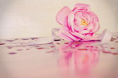 2/365Ribbons Flow Like Water (geelovesyou) Tags: pink flower reflection texture nature water rose yellow flow drops you photos ribbon naturex