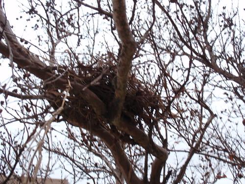 Is It a Nest