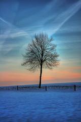Borken - Lippe-Issel-Niederrhein (Daniel Mennerich) Tags: allxpressus colorphotoaward canon dslr eos hdr hdri spiegelreflexkamera slr