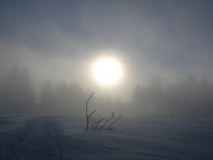 Foggy snow landscape (mamietherese1) Tags: winter fog expression ngc alsace ohhh winterbeauty ourtime callingallangels supershot rockpaper superphotographer soulscapes kartpostal fantasticnature abigfave alberoefoglia top20autumn theenchantedcarousel artofimages saariysqualitypictures artistictreasurechest redmatrix imagicland sailsevenseas sailsevenseasmaster galleryofdreams newgoldenseal fleursetpaysages abokehoflight ringexcellence dblringexcellence tplringexcellence cedruseternum phoeniximmortal lovelymotherearth healinglightofthespirit universeofphotography lightartmasterpiece aboveandbeyondlevel1 flickrstruereflection1 flickrstruereflection2 aboveandbeyondlevel2 rememberthatmomentlevel1 rememberthatmomentlevel2 top25naturesbeauty
