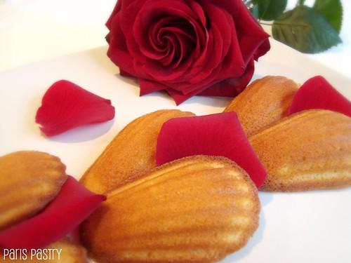 玫瑰花蕾玛德琳