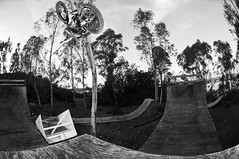 Mikey Opposite Table at Haro Ramps (brandonmeans) Tags: wood trees winter sunset blackandwhite ride bikes ramps riding biking hip southerncalifornia premium shred snafu haro hellonearth d300s brandonmeans mikeybabbel oppositetable