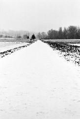 You're on your way (Mind & Brain) Tags: road field analog switzerland vanishingpoint blackwhite highcontrast depthoffield minimalism countrylane m6 acre agfaapx400 thurgau gottlieben teleelmarit90mm28 rodinal15011minutes