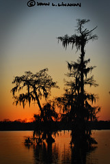 Lake Martin Sunset (Jobe Roco) Tags: sunset sky orange reflection silhouette evening nikon louisiana spanishmoss 2010 1916 d60 baldcypress tamron70300mm breauxbridge cmwdorange lakemartincypressislandpresserve