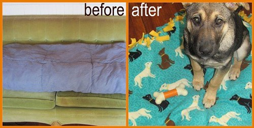 doggie bed before after