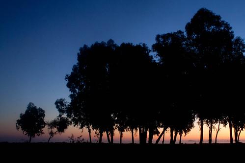 Photo: Silhouette d'arbres sur lever de soleil