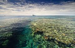 more reef (Cruising, traveling & dive pics.) Tags: boat cd rob wheeler 2011
