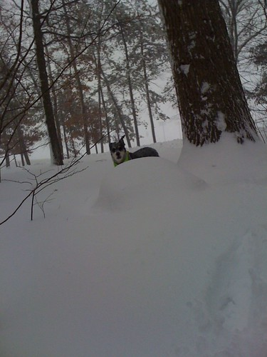 snowood 2011