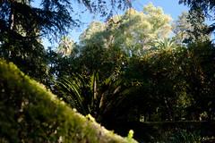 Séville / Jardin de l'Alcazar / Géométrie végétale (Sébastien Lucas) Tags: jardin vert arbres alcazar juxtaposition paysage séville oranger andalousie végétation jardinméditerranéen jardinandalou jardinaraboandalou