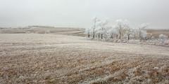 Winter pasture. (terranoesis) Tags: winter nebraska hoarfrost horizon farmland hills pasture silence cedar
