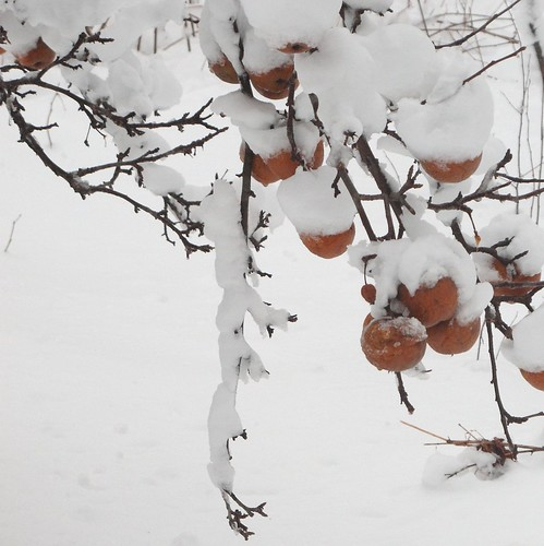 Pumpkin Sweets in the Snow