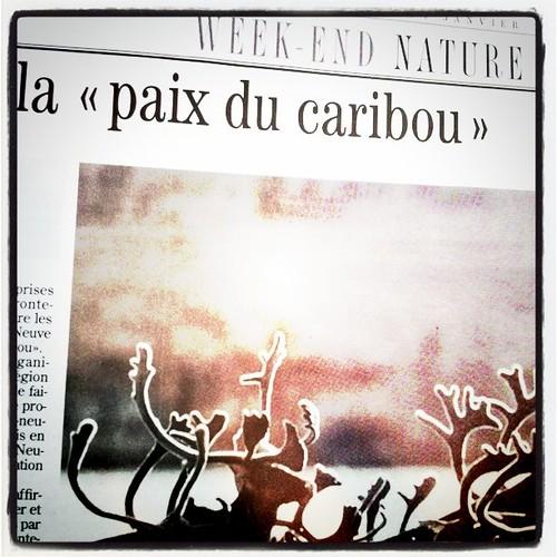 La paix du Caribou