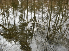 Trees reflected on lake surface