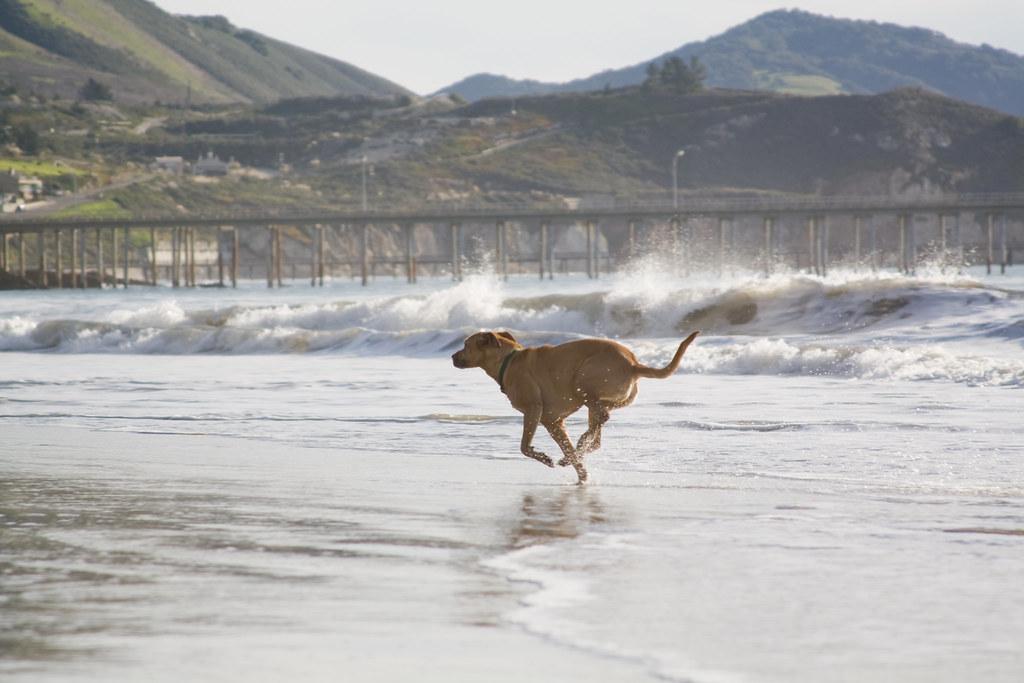 Water Runner