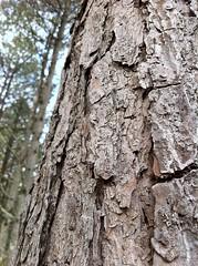The forest (sebastian vaden) Tags: tree nature georgia treeline