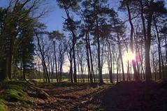 wood walk (Wim Koopman) Tags: wood trees light sun holland netherlands dutch canon walking photography photo hiking path walk stock hike powershot footpath veluwe stockphoto s90 stockphotography s100 vierhouten nunspeet wpk s95