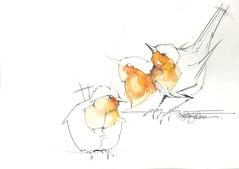 6 - orange (Jennifer Kraska) Tags: orange bird sketch jennifer kraska jenniferkraska