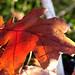 A January Autumn