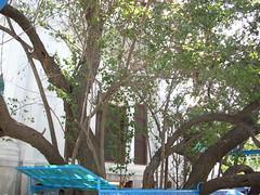 DSCN1078 (SukhvirSingh) Tags: india temple golden rss sri sahib punjab amritsar baba babar sikhism waheguru singh khalsa akali kaur sikhi nihang akal akj manak vaheguru waheguroo vaheguroo templesri budhadal karku tarnadal hamandir karkuakal tiksal manakindiapunjabamritsargolden