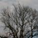 Längtans träd