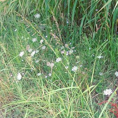 Fiorellini (PhoebeZu) Tags: flowers fiorellini nature