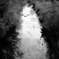 The North Branch 001 (noahbw) Tags: chicagoriver d5000 middleforksavanna nikon abstract blackwhite blackandwhite bw landscape marshland monochrome noahbw prairie reflection river square summer water wetlands