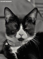 Mittens (SteveH1972) Tags: canon70200lf28usmnonis canon700d canon 700d canon70200 pet adorable cute animal cat blackandwhite black white indoor indoors inside northenengland northlincolnshire bartonuponhumber whiskers uk europe britain