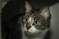 PAWS Kittys (wacamerabuff) Tags: cat gato neko  chat diekatze gatto necko katze