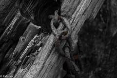 Rust and Wood (Pool-8) Tags: wood broken water metal rust iron peaceful abandon forgotten dismantled leftbehind overrun tookover