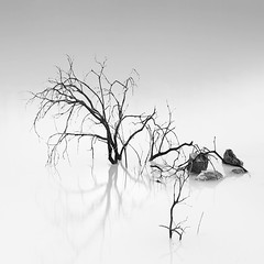 Shade Of Pale (Hengki Koentjoro) Tags: trees white black leave water rock square long exposure smooth surface less
