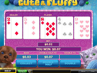 free Cute and Fluffy gamble bonus feature