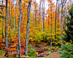 2004-10-10 An Autumn Forest (T. Le Thang) Tags: autumn fab canada forest automne landscape paysage fort laurentides topshots worldwidelandscapes natureselegantshots panoramafotogrfico