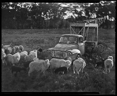 The Simple Life (*junket*) Tags: bw film iso100 bokeh farm australia nsw 4x5 largeformat graflex speedgraphic 5x4 selfdeveloped tiltshift ilforddelta100 tessar f27 carlzeissjena southerntablelands top20blackandwhite sheetfilm ilfordid11 bokehlicious autaut 165mm pacemakerspeedgraphic tallong carlzeissjenatessar165mmf27