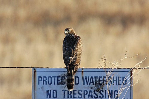 hawk no trespass dave harper oakley