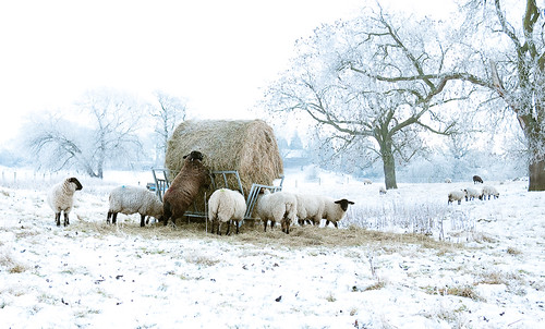Winter Feed by jamarmstrong, on Flickr