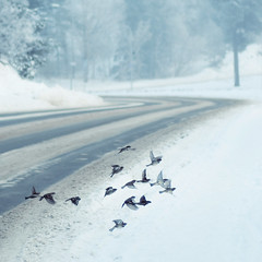Winter Birds (~ Maria ~) Tags: winter birds flying wings dof explore finches frontpage naturepoetry absolutegoldenmasterpiece