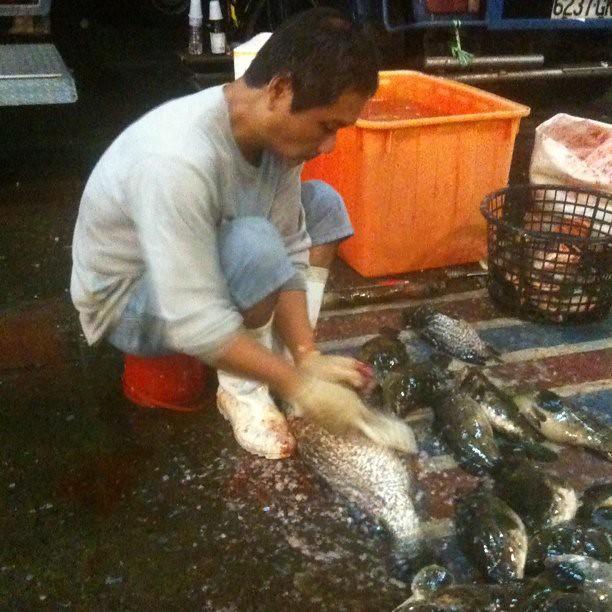 戰利品,石斑魚