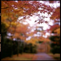 (zyryntyrah) Tags: 120 6x6 film japan kyoto kodak bokeh hasselblad villa imperial medium format kansai portra katsura carlzeiss hasselblad500cm 400nc 80mmf28 planart sirintira zyryntyrah