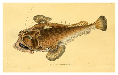 018-The natural history of British fishes 1802-Edward Donovan