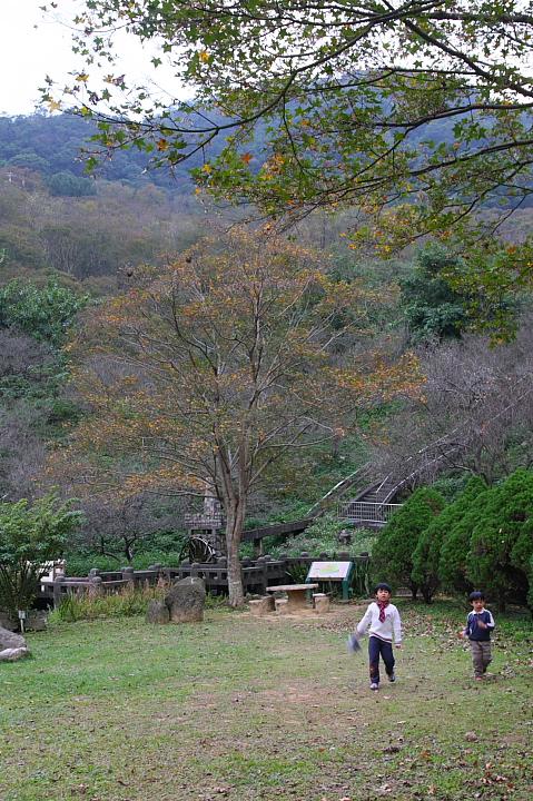 槭林公園017