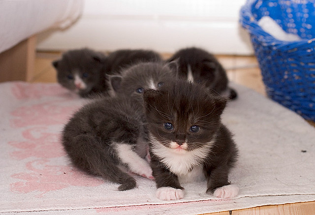 cute foster tiny little kittens