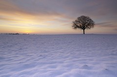 Winter (photosenvrac) Tags: tree landscape soleil photo hiver subject neige paysage arbre aube levdesoleil supershot treesdiestandingup